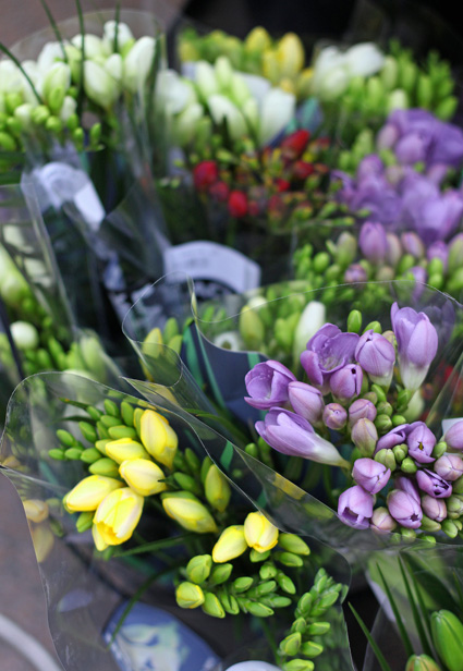 Stockmann_freesiat
