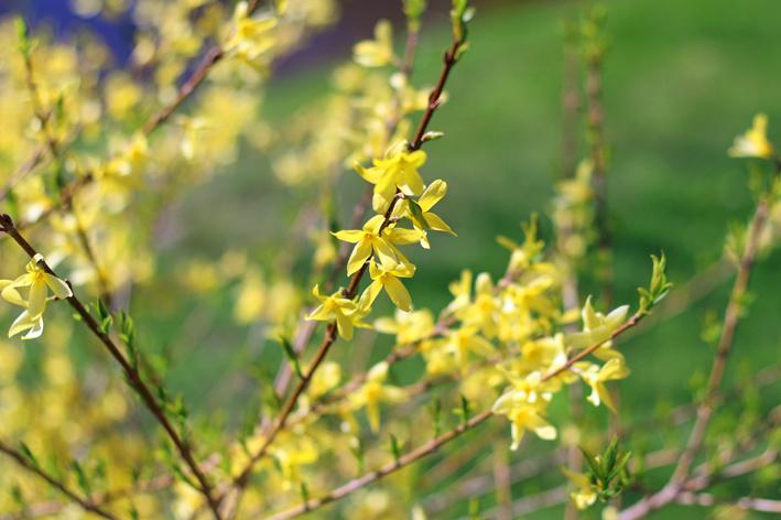 keltaiset kukat